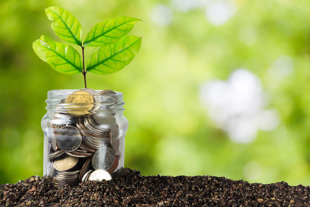 plant in jar of change